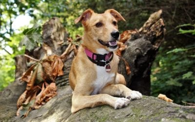 3 Summertime Outdoor Safety Tips for Pets